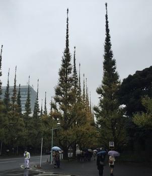 いちょう祭り①B.jpg